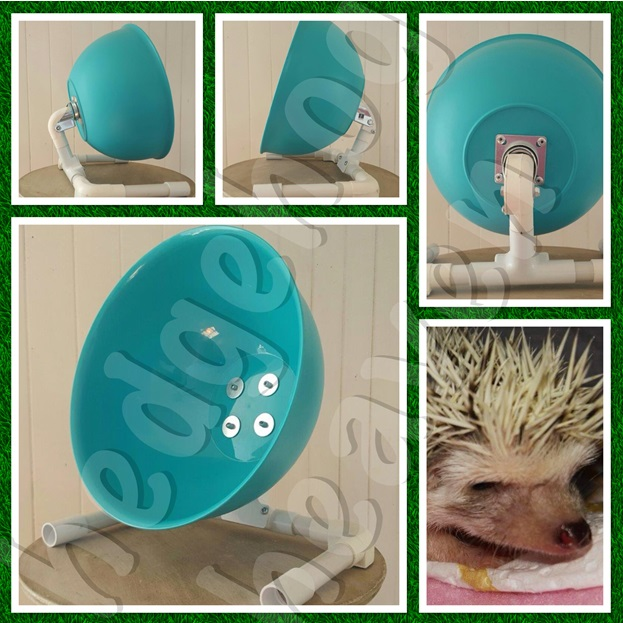 exercise-wheel-a-must-for-a-healthy-hedgie